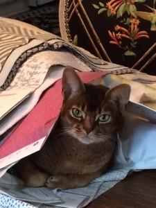 Remi under fabrics